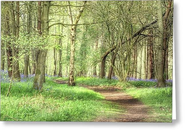 Bentley Woods, Warwickshire #landscape Greeting Card