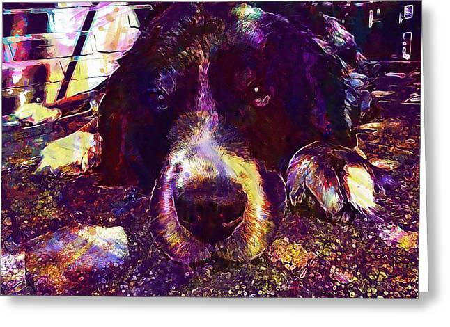 Berner Sennen Dog Lazy Summer Relax  Greeting Card