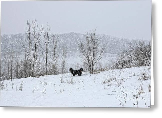 Greeting Card featuring the photograph Bernes Mountain Dog In Snow by Charline Xia