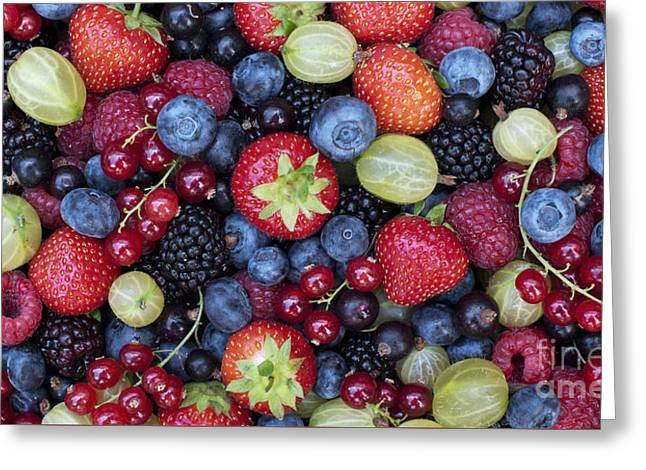 Berried  Greeting Card by Tim Gainey