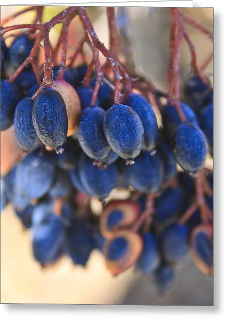 Berries Blue Too Greeting Card
