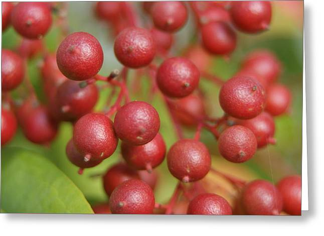 Greeting Card featuring the photograph Berries by Heidi Poulin