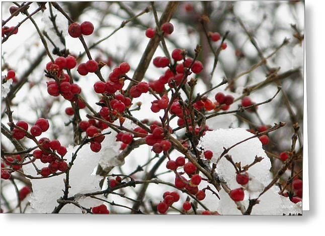 Berries In Snow Greeting Card by Martie DAndrea