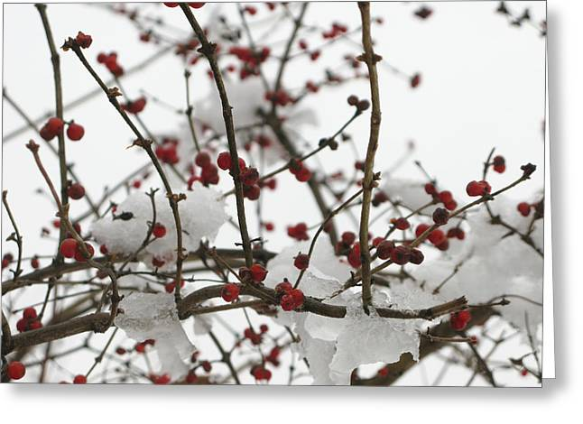Berries In The Snow Greeting Card by Martie DAndrea