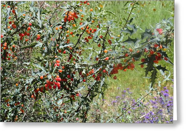 Berries On The Vine Greeting Card
