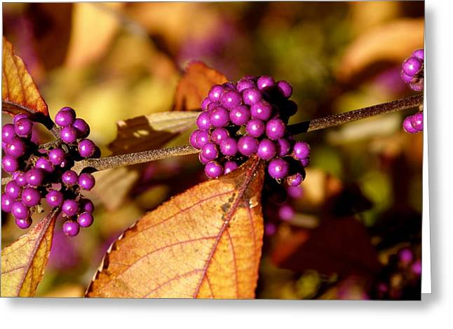 Berry Bush Greeting Card by Sonja Anderson