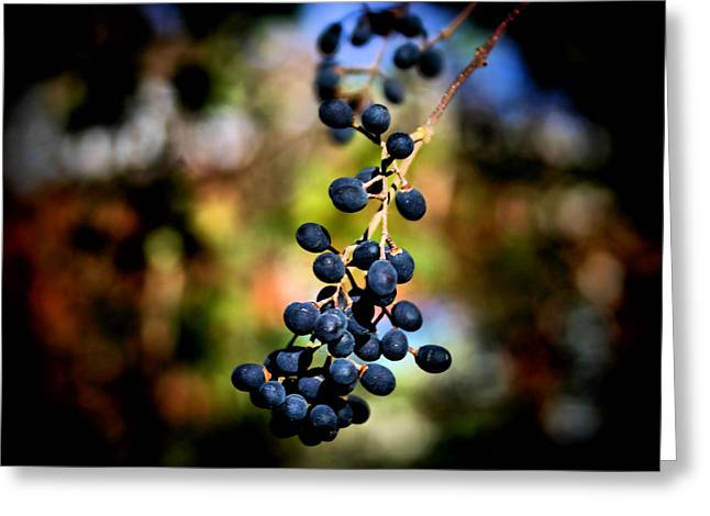 Berry Cold Out Greeting Card by Karen M Scovill