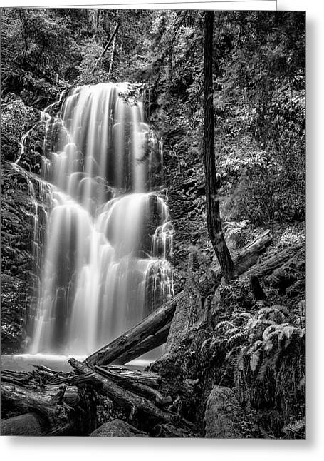 Berry Creek Falls Greeting Card by Steve Spiliotopoulos