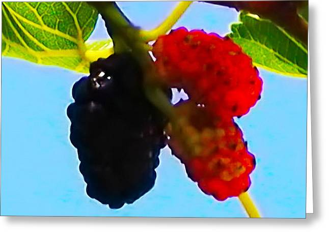 Berry Good Greeting Card by Bill Cannon