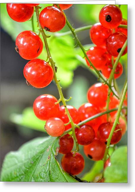Greeting Card featuring the photograph Berry Good by Isabella F Abbie Shores FRSA