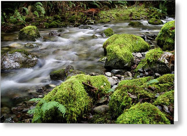 Rainforest Stream Greeting Card by Margaret Goodwin