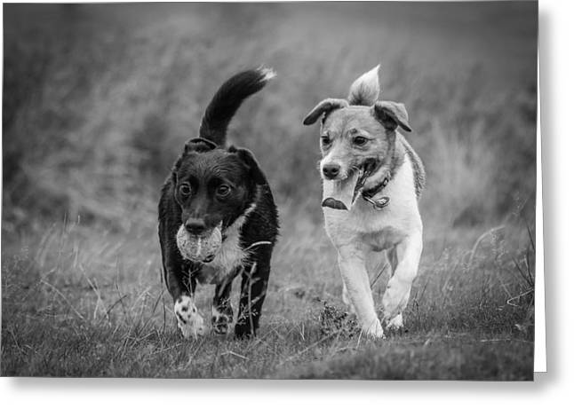 Greeting Card featuring the photograph Best Buddies by Nick Bywater