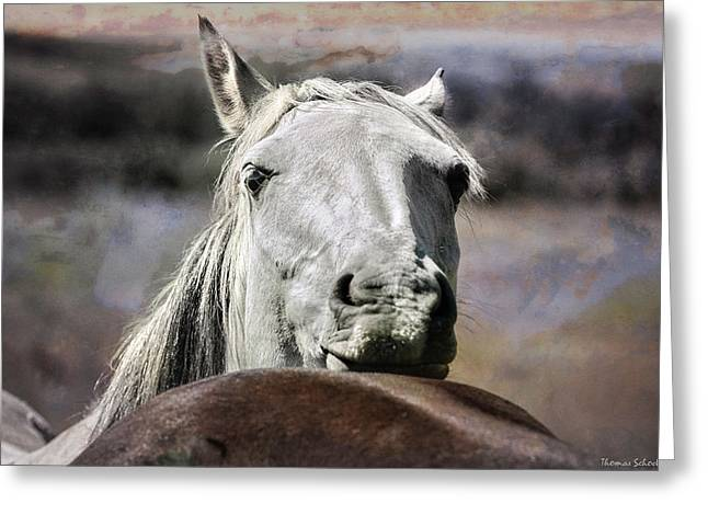 Best Of Friends Greeting Card by Thomas Schoeller