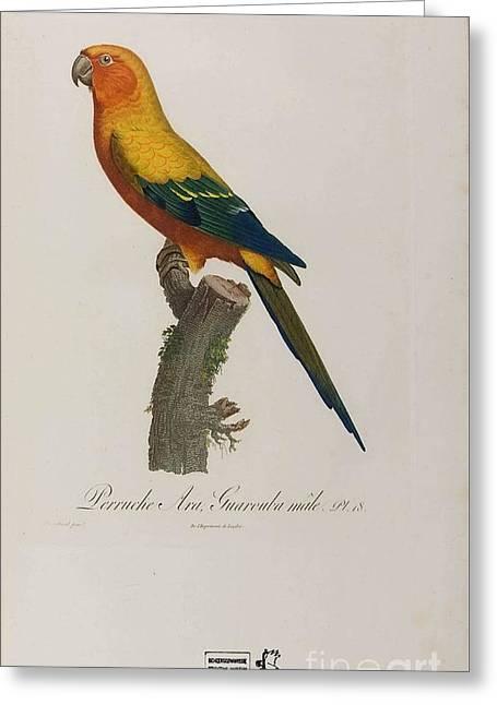 Bestiarius  Bestiary  Greeting Card by MotionAge Designs
