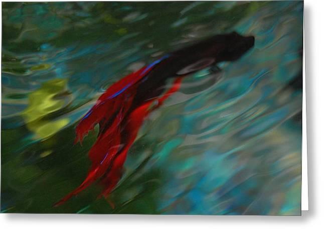 Betta In The Water Greeting Card by Carla Menjivar