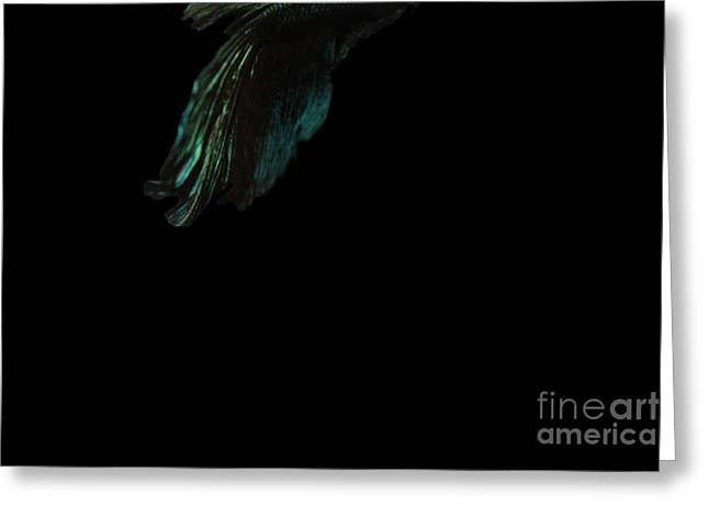 Betta Tail Greeting Card by LKB Art and Photography