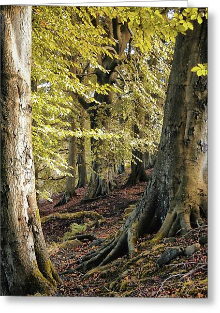 Between Trees Greeting Card by Philip Openshaw