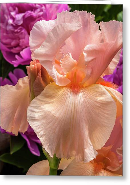 Beverly Sills Iris Greeting Card