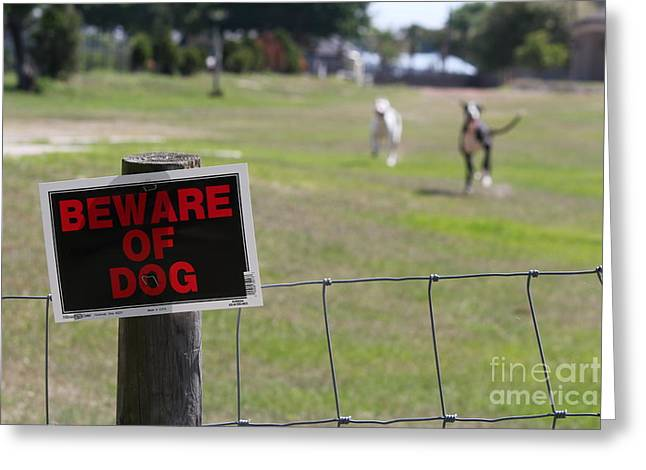 Beware Of Dogs Greeting Card