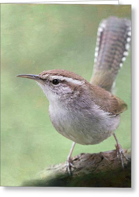 Greeting Card featuring the photograph Bewick's Wren by Angie Vogel