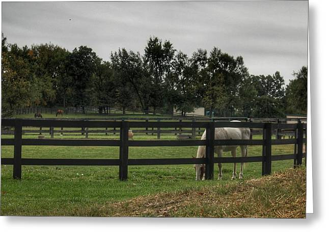 1004 - Beyond The Fence White Horse Greeting Card