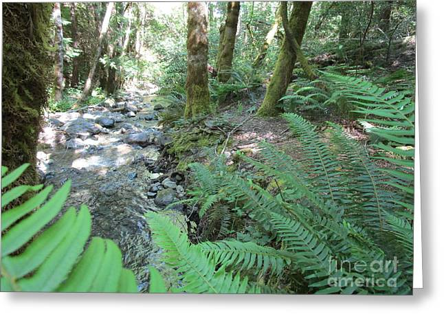 Greeting Card featuring the photograph Beyond The Ferns by Marie Neder