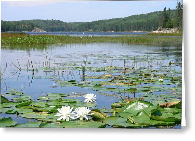 Beyond The Lilly Pads Greeting Card by Peter  McIntosh