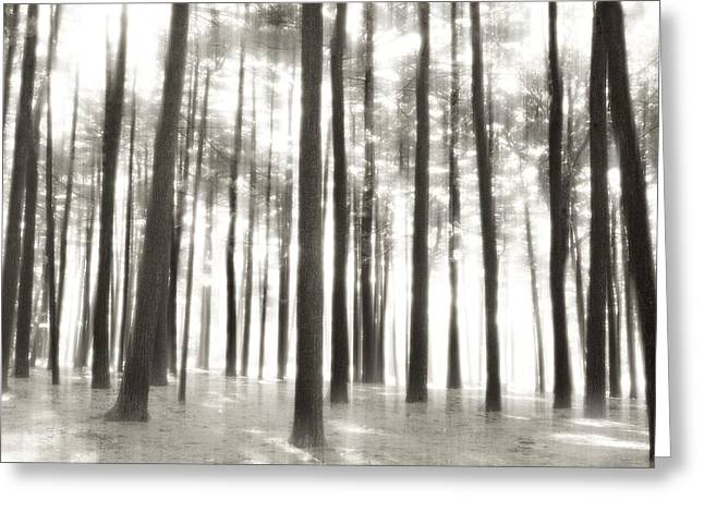 White Pine County Greeting Cards - Beyond The Trees - Ocean County Park Greeting Card by Angie Tirado