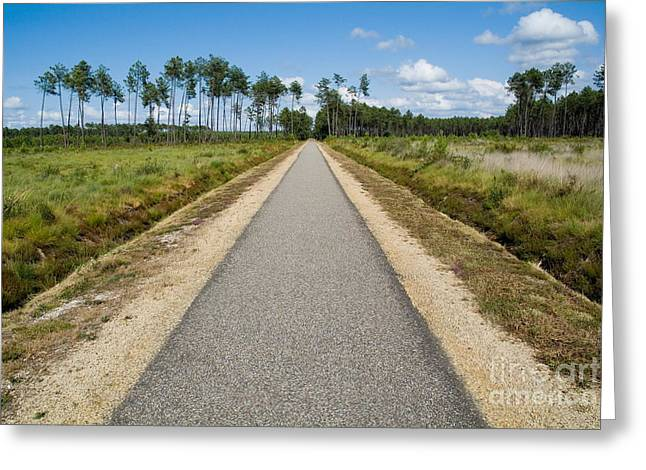 Bicycle Track Passing Through The Landes Forest Greeting Card by Sami Sarkis
