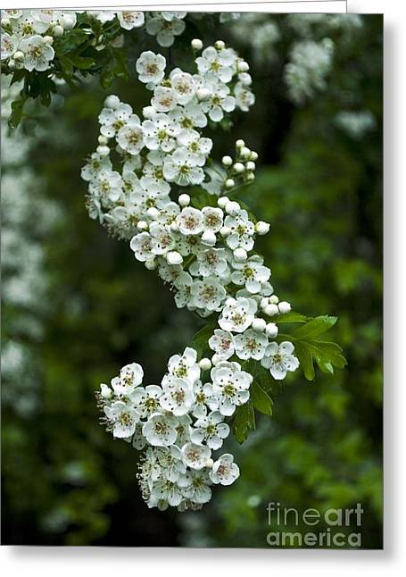 Bidwell Park Bouquet Greeting Card by Richard Verkuyl