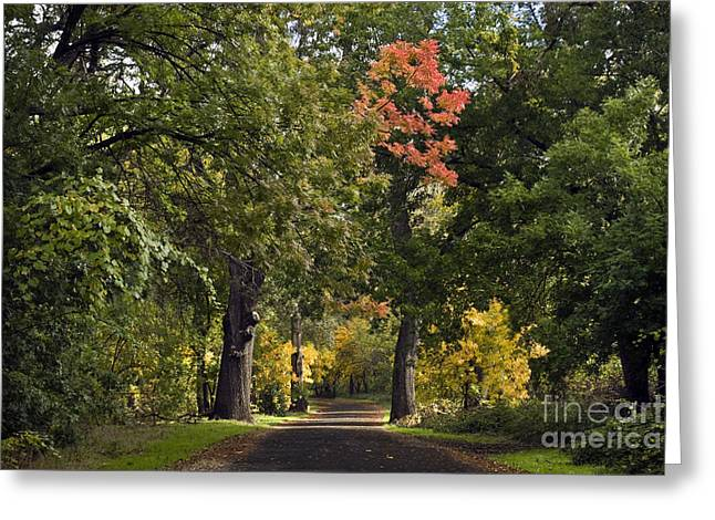 Bidwell Park By One Mile Greeting Card