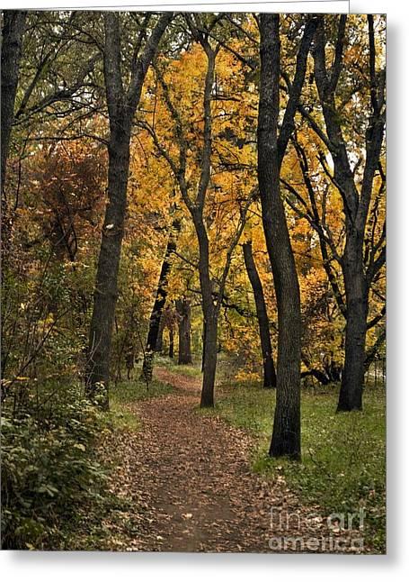 Bidwell Park Fall Greeting Card by Richard Verkuyl