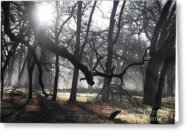 Bidwell Park Sunrise Greeting Card by Richard Verkuyl