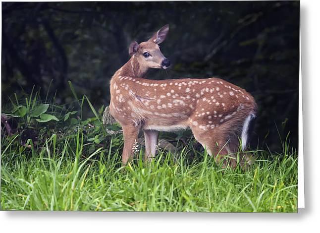 Big Bambi Greeting Card