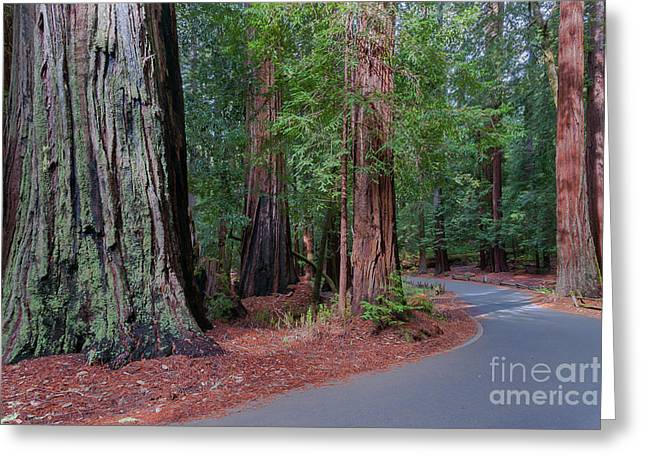 Big Basin Redwoods Greeting Card