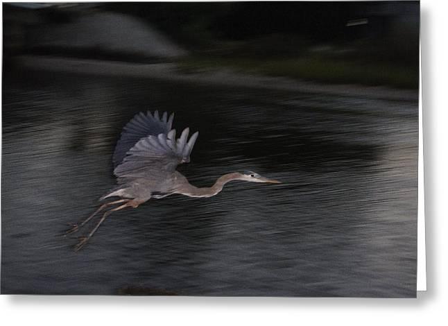 Big Blue Heron In Flight-debbie-may Greeting Card by Debbie May