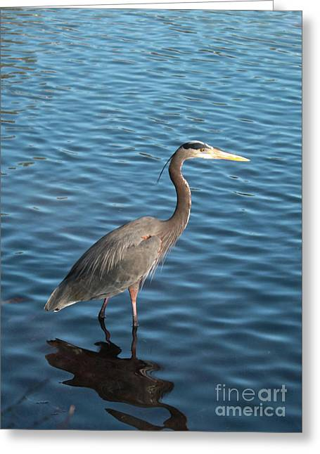 Big Blue In Blue Water Greeting Card by Carol Groenen