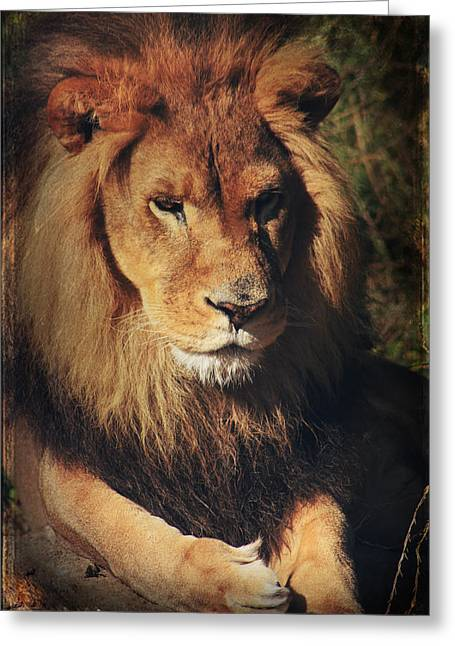 Lions Greeting Cards - Big Boy Greeting Card by Laurie Search