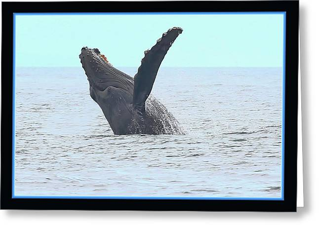 Big Breach Greeting Card by BYETPhotography