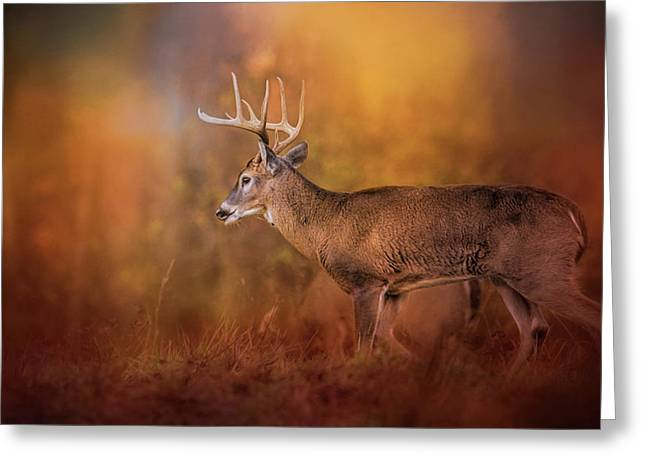 Big Buck In Autumn White Tailed Deer Art Greeting Card