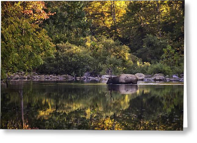 Big Bull In Buffalo National River Fall Color Greeting Card