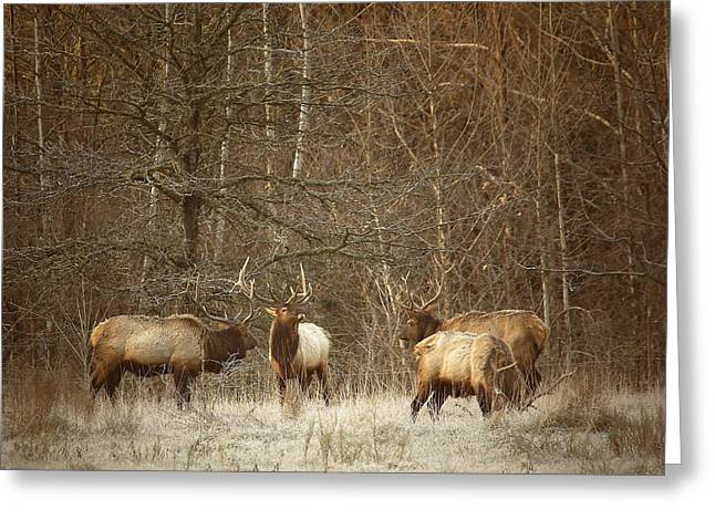 Greeting Card featuring the photograph Big Bull Meeting In Boxley Valley by Michael Dougherty
