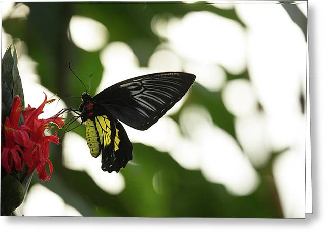 Greeting Card featuring the photograph Big Butterfly by Brian Hale