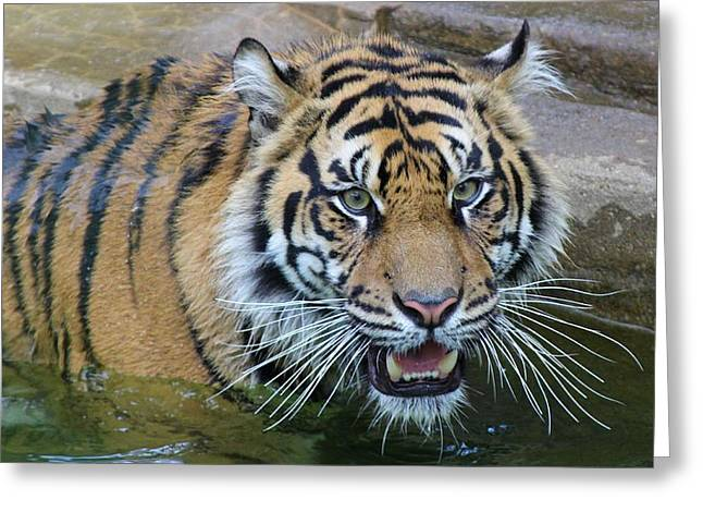 Greeting Card featuring the photograph Big Cat by Elizabeth Budd