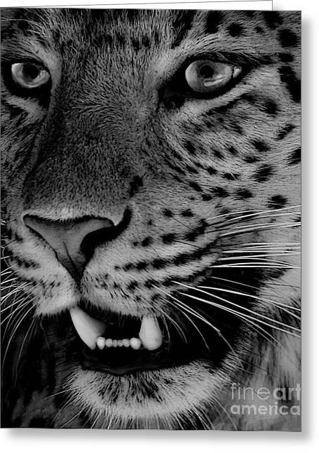 Greeting Card featuring the painting Big Cat II by Louise Fahy