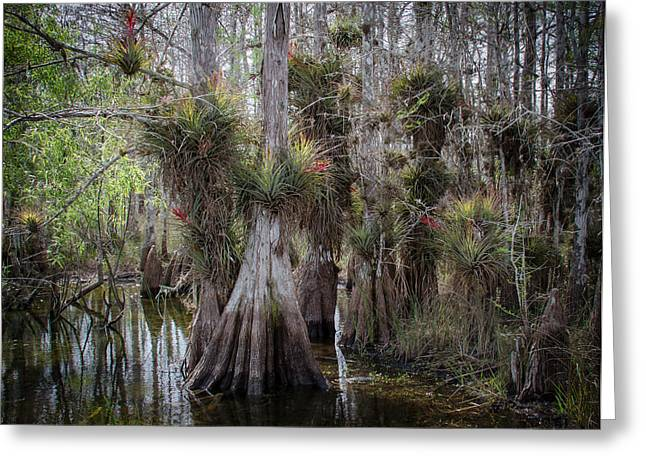 Big Cypress Preserve Greeting Card by Bill Martin