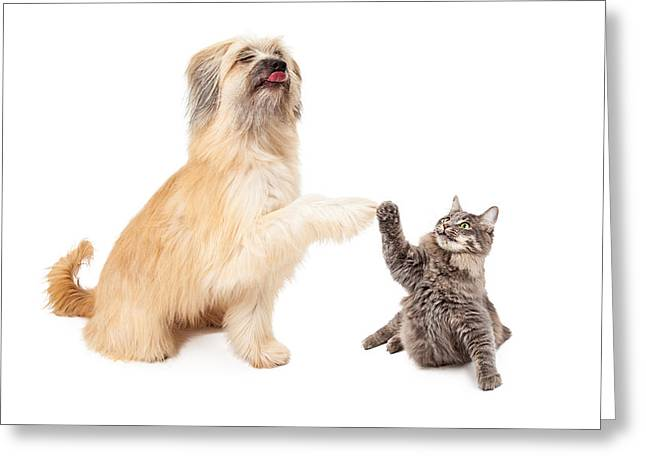 Big Dog And Little Cat High Five Greeting Card