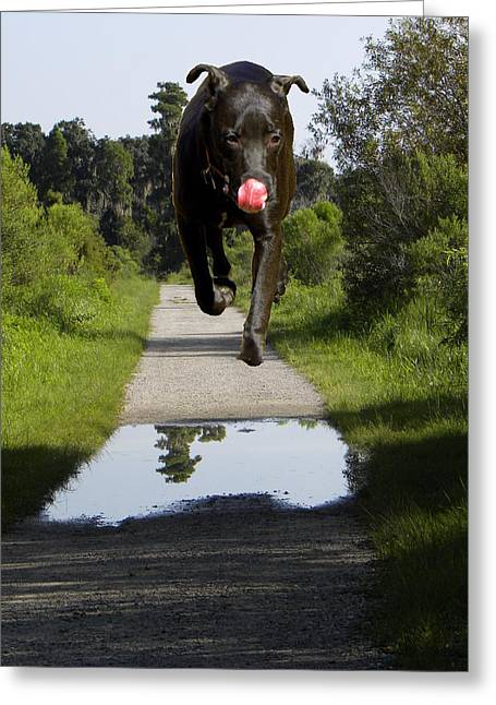 Big Dog On Heron Hideout Trail Greeting Card