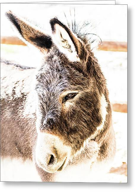 Big Ears Greeting Card