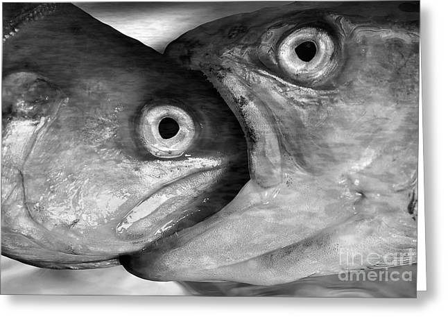 Big Fish Eat Small Fish Greeting Card by Michal Boubin